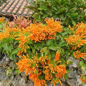 石垣島150210_2.jpg