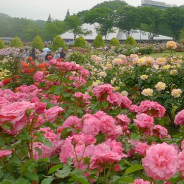 花フェスタ180530_2.jpg