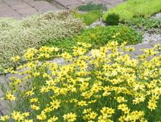 ガーデン071010.jpg