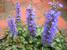 ガーデン090414_2.jpg