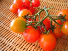 トマト080802.jpg