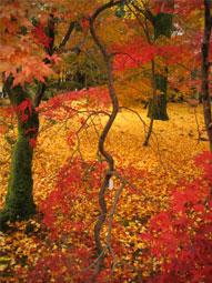 京都の紅葉.jpg