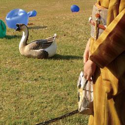 着物と鴨091203.jpg