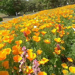 ひたち海浜公園150519_1.jpg