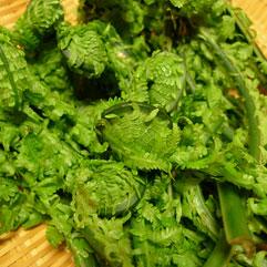 山菜110511_1.jpg