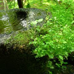 日本の庭110528_5.jpg