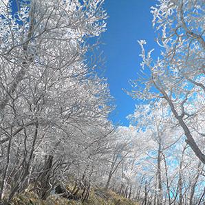 霧氷160111_2.jpg